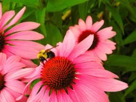 pink flower 0715